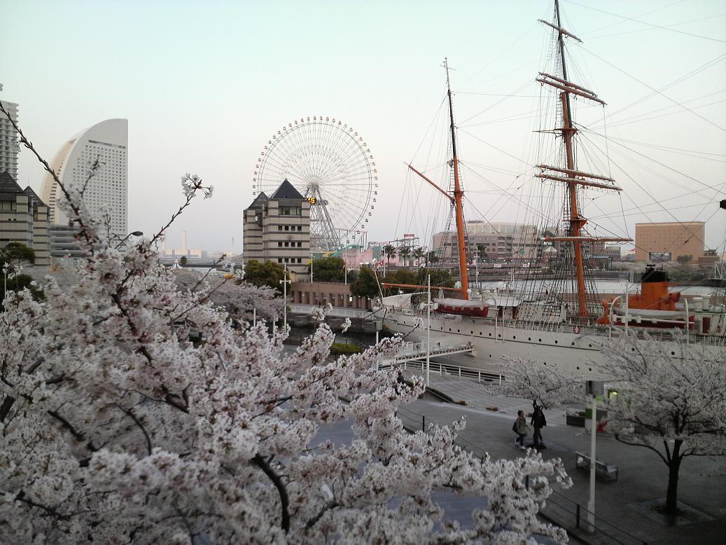 Sakuragicjo_2