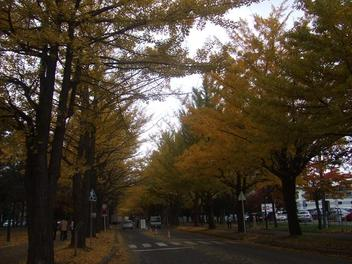 Hokudai_icho